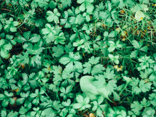 Weeding out error